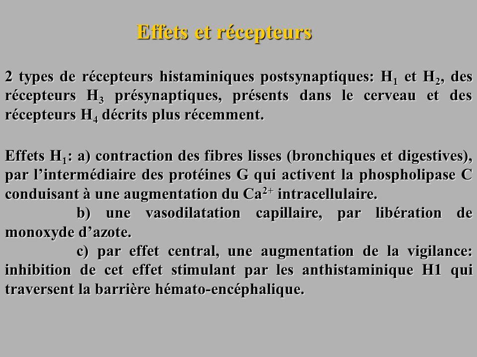 Effets et récepteurs 2 types de récepteurs histaminiques postsynaptiques: H 1 et H 2, des récepteurs H 3 présynaptiques, présents dans le cerveau et d