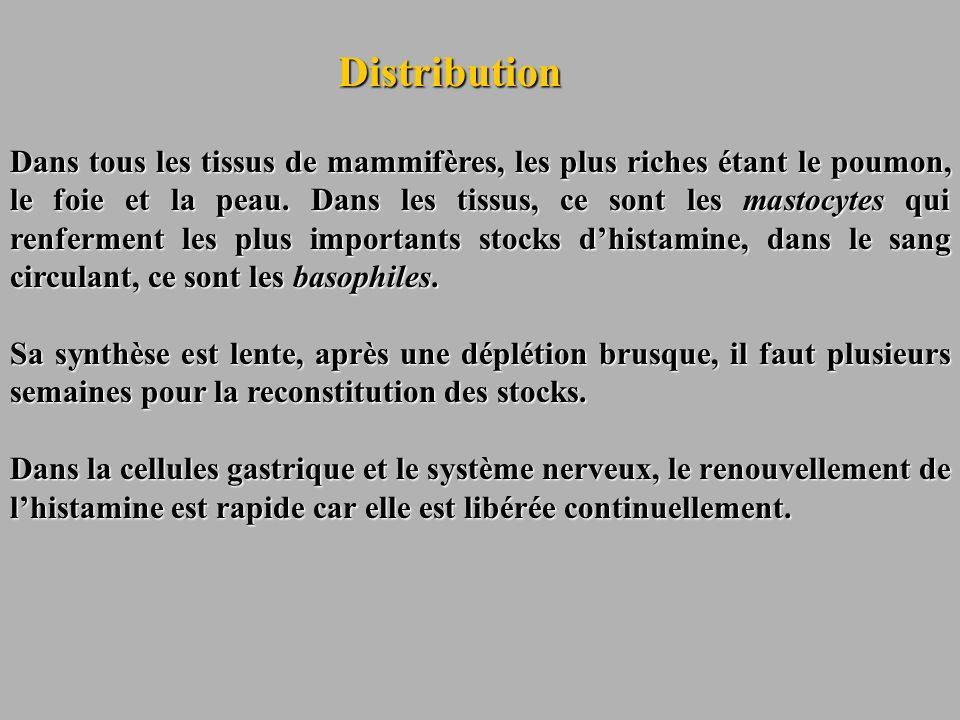 Distribution Dans tous les tissus de mammifères, les plus riches étant le poumon, le foie et la peau. Dans les tissus, ce sont les mastocytes qui renf