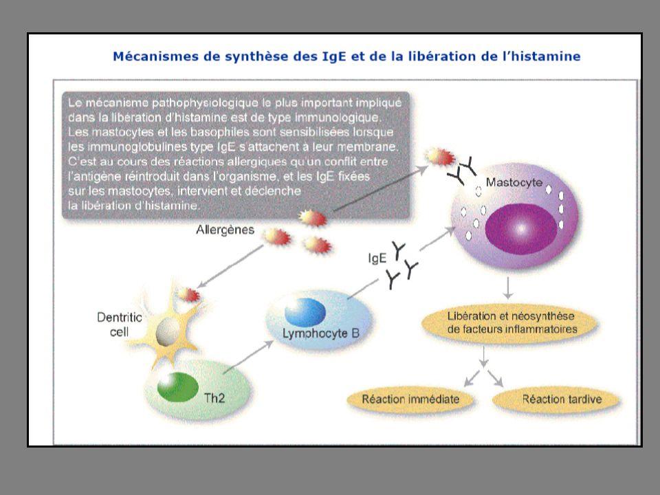 Médicaments antihistaminiques H 1 Il sagit dune classe de médicaments.