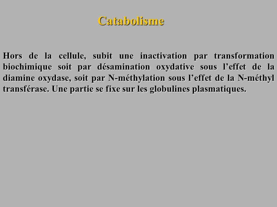 Catabolisme Hors de la cellule, subit une inactivation par transformation biochimique soit par désamination oxydative sous leffet de la diamine oxydas