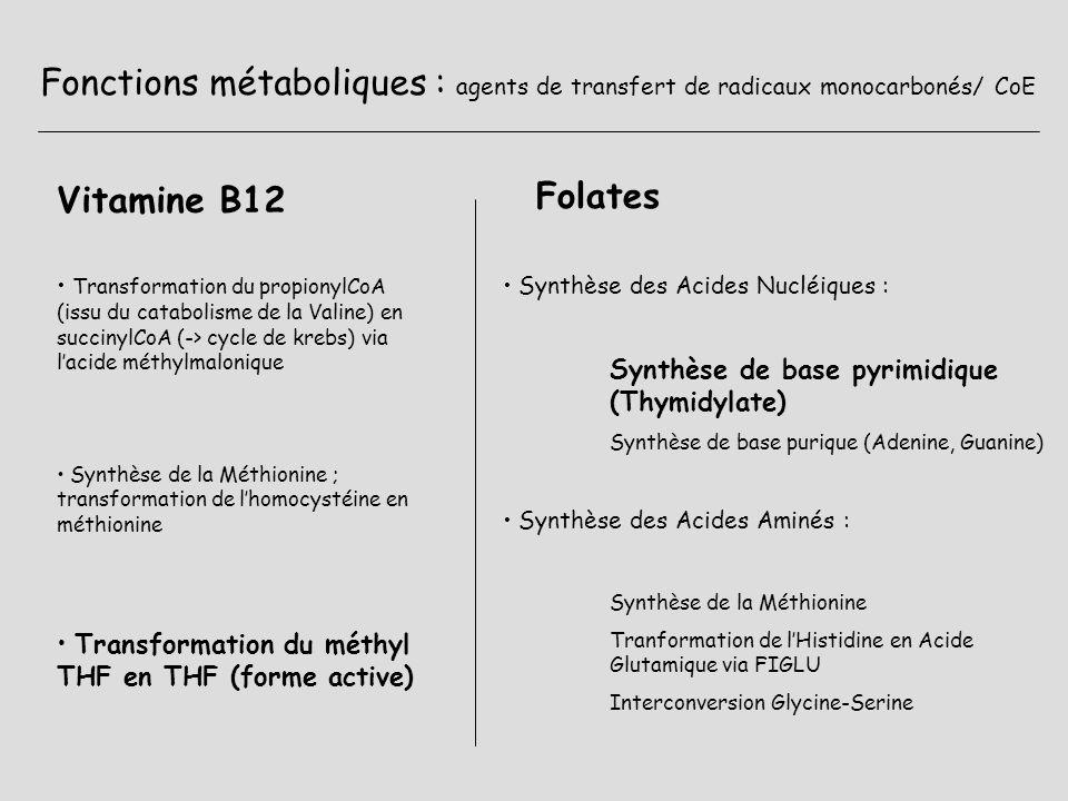 Fonctions métaboliques : agents de transfert de radicaux monocarbonés/ CoE Vitamine B12 Folates Synthèse des Acides Nucléiques : Synthèse de base pyri