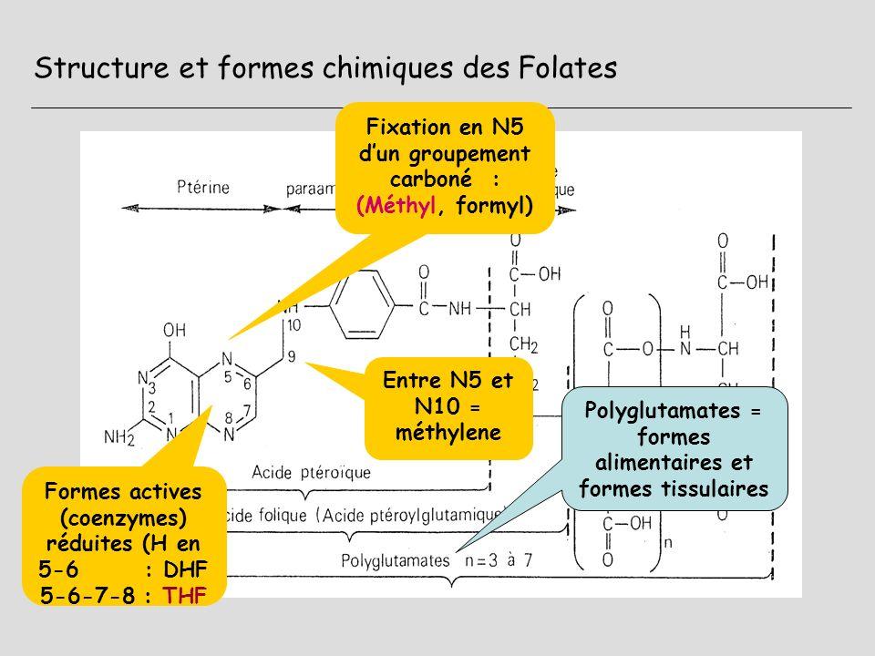 Structure et formes chimiques des Folates Formes actives (coenzymes) réduites (H en 5-6 : DHF 5-6-7-8 : THF Fixation en N5 dun groupement carboné : (M