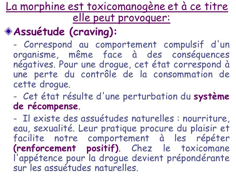 La morphine est toxicomanogène et à ce titre elle peut provoquer: Assuétude (craving): - Correspond au comportement compulsif d'un organisme, même fac