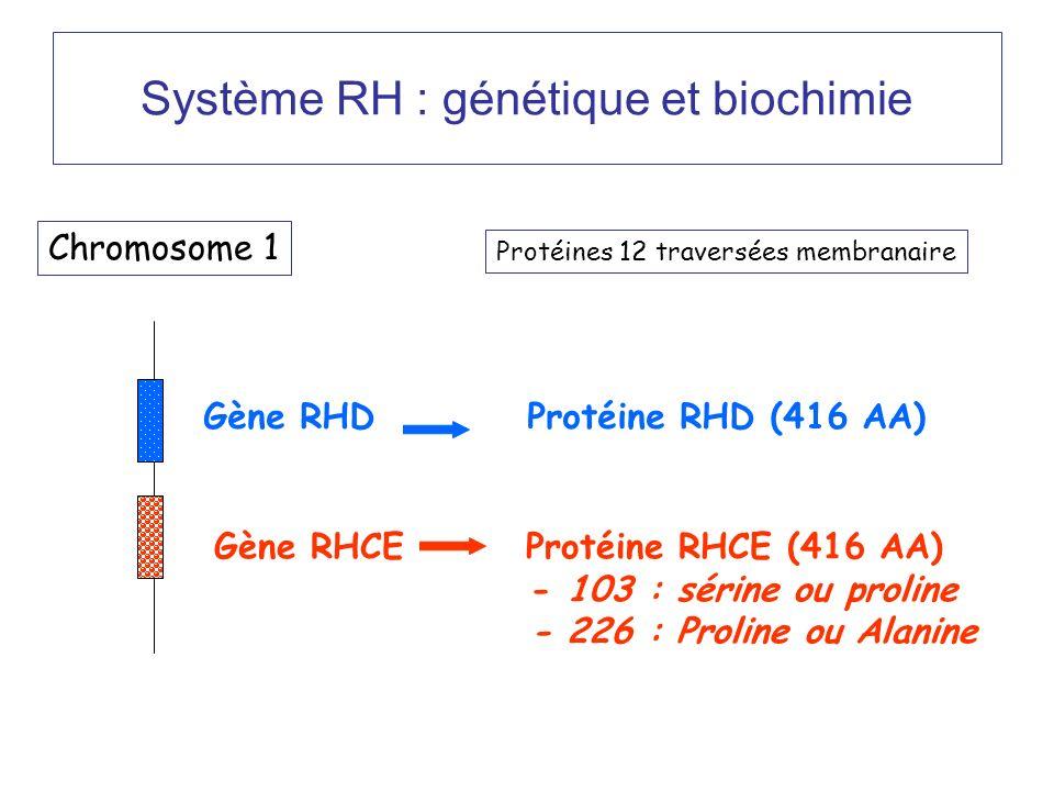 Système RH : génétique et biochimie Chromosome 1 Gène RHD Protéine RHD (416 AA) Gène RHCE Protéine RHCE (416 AA) - 103 : sérine ou proline - 226 : Proline ou Alanine Protéines 12 traversées membranaire