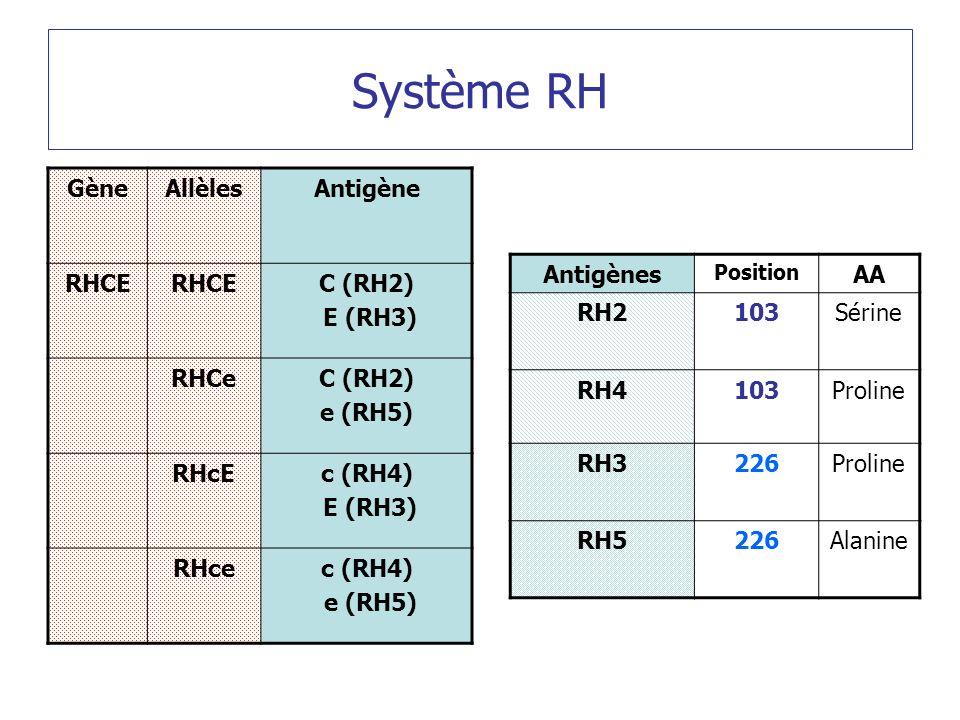 Système RH GèneAllèlesAntigène RHCE C (RH2) E (RH3) RHCeC (RH2) e (RH5) RHcEc (RH4) E (RH3) RHcec (RH4) e (RH5) Antigènes Position AA RH2103Sérine RH4103Proline RH3226Proline RH5226Alanine