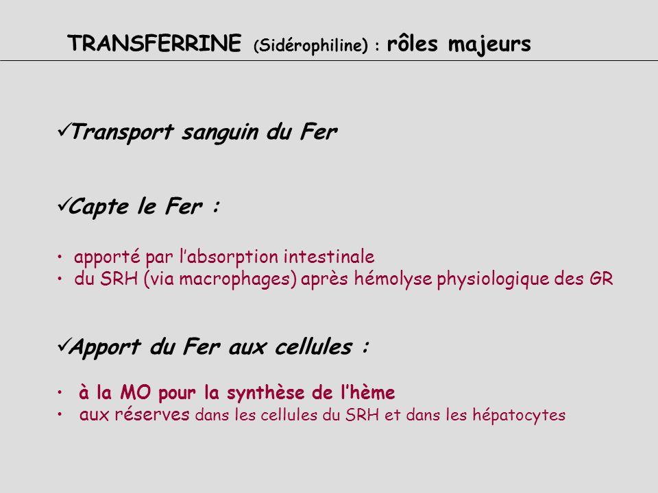 TRANSFERRINE ( Sidérophiline) : Structure Béta 1 Glycoprotéine Synthétisée par le foie Protéine dimérique Saturée au 1/3 de sa capacité CS= Fe/TF = 33
