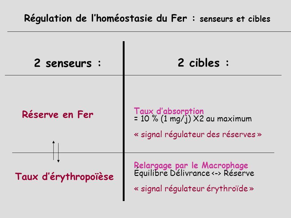 Cycle journalier du Fer : Elimination Pertes physiologiques journalière faible = 1 mg urinaires : < 0,1 mg (+ si SN) biliaires desquamation (peau,phan