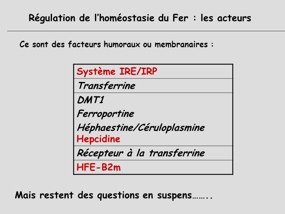 Régulation de lhoméostasie du Fer : senseurs et cibles 2 senseurs : Réserve en Fer Taux dérythropoïèse 2 cibles : Taux dabsorption = 10 % (1 mg/j) X2