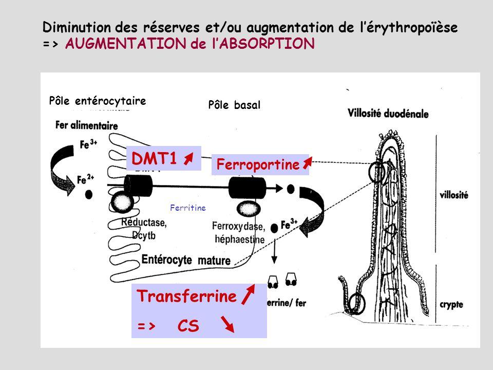 Système IRE/IRP Transferrine DMT1 Ferroportine Héphaestine/Céruloplasmine Hepcidine Récepteur à la transferrine HFE-B2m Régulation de lhoméostasie du