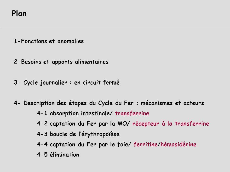 Métabolisme du Fer Pascale CORNILLET-LEFEBVRE Laboratoire dHématologie CHU de REIMS Cours DCEM1 2009-2010