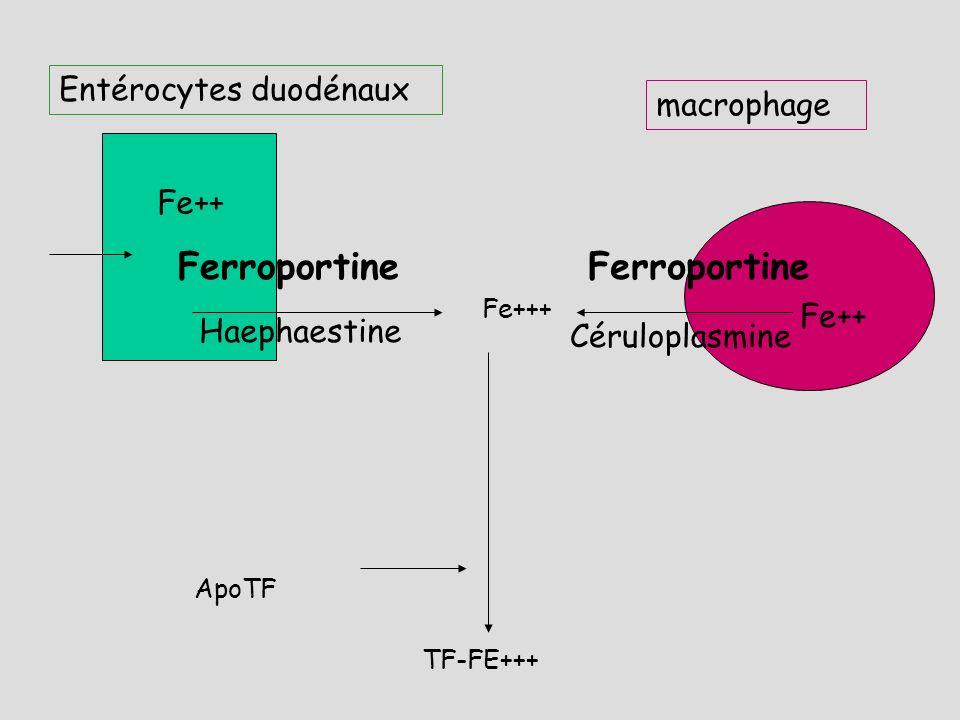 Régulation de lhoméostasie du Fer : Hepcidine Hepcidine : découverte après screening des gènes hyperexprimés lors dune surcharge en Fer (2001) synthét