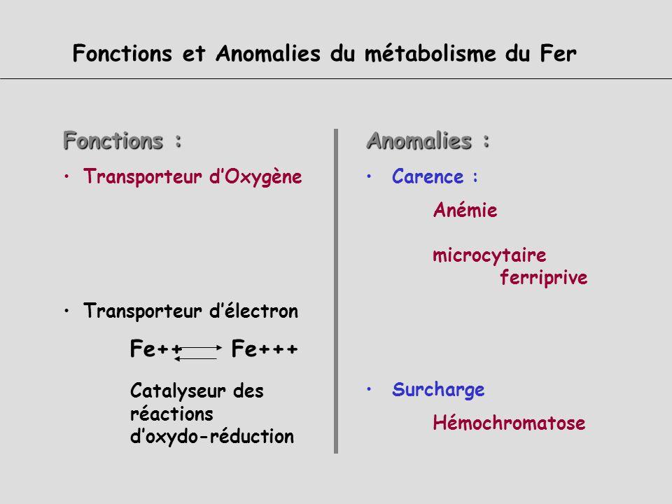 5-Régulation de lhoméostasie du Fer Senseurs et Cibles Les acteurs Mécanismes daugmentation de labsorption intestinale Système IRE/IRP Hepcidine HFE 6