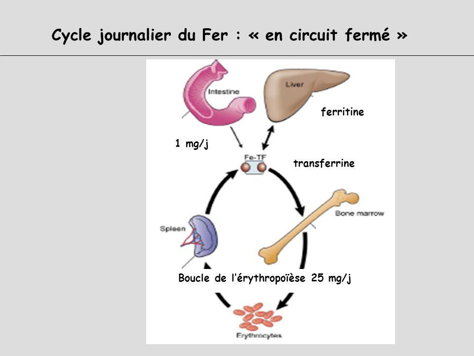Distribution du Fer dans lorganisme : Trois compartiments Fer (Fe++) héminique Fer (Fe+++) non héminique 3 à 4 g Tissus/cellules liéFonctionnelHémoglo