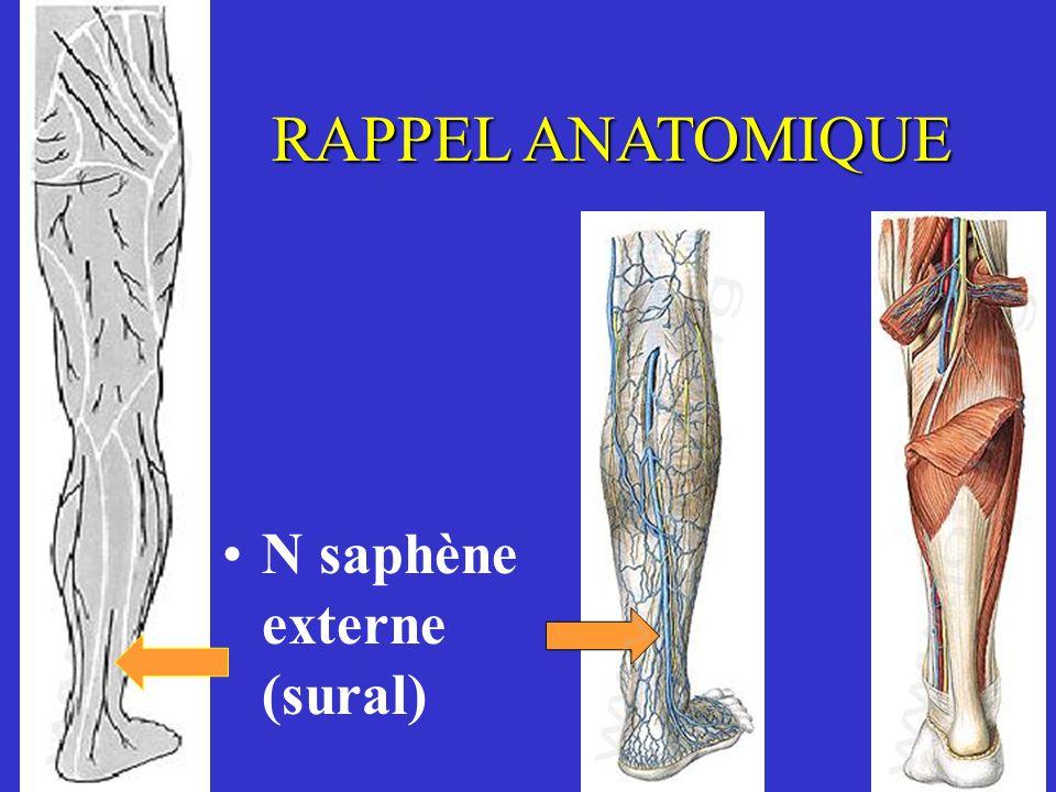 RAPPEL ANATOMIQUE N saphène externe (sural)