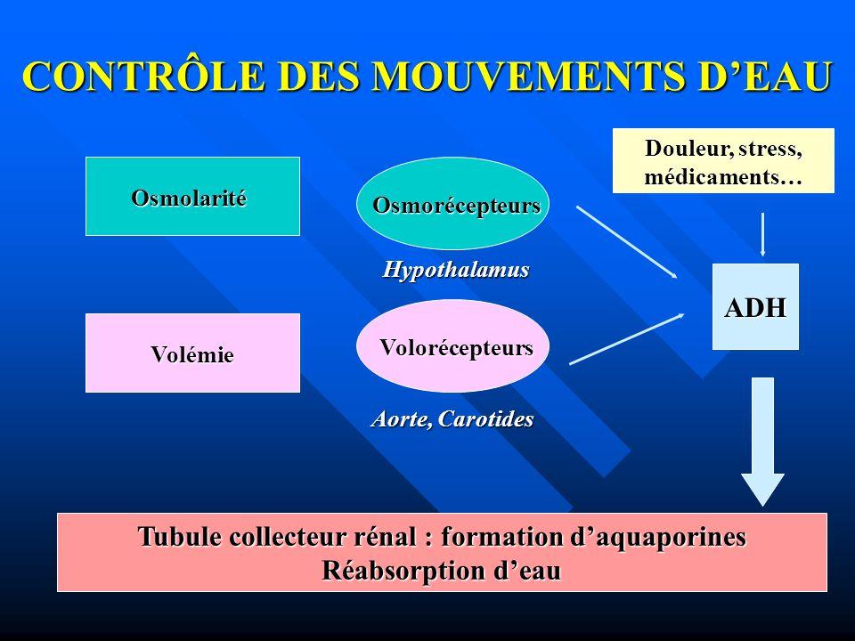 CONTRÔLE DES MOUVEMENTS DEAU Osmolarité Volémie Osmorécepteurs Volorécepteurs ADH Hypothalamus Aorte, Carotides Tubule collecteur rénal : formation da