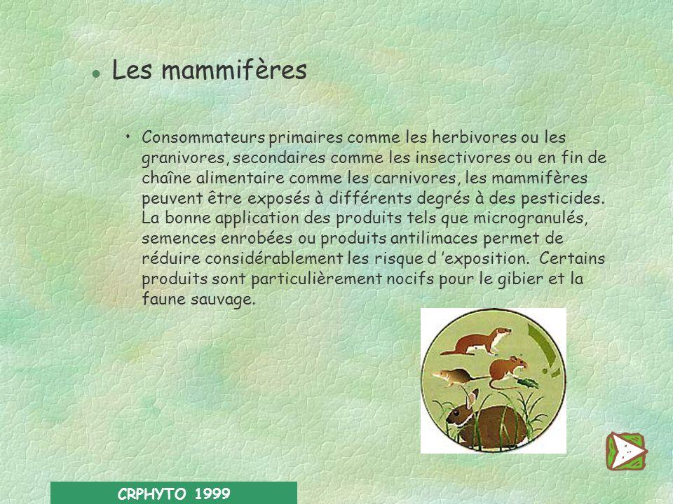 CRPHYTO 1999 l Les organismes auxiliaires De nombreux insectes exercent une activité bénéfique en contrôlant les populations de ravageurs. Les insecti