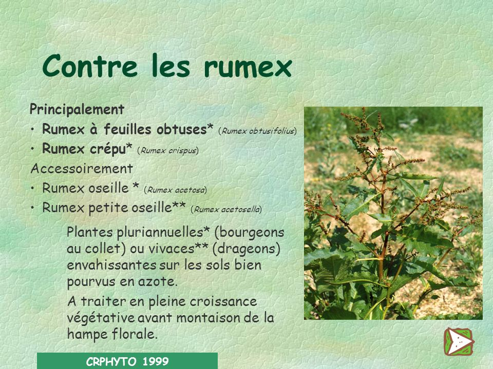 CRPHYTO 1999 Contre les orties Grande ortie (Urtica dioïca) Indicatrice d un sol riche en azote, cette adventice vivace se développe souvent par plaqu