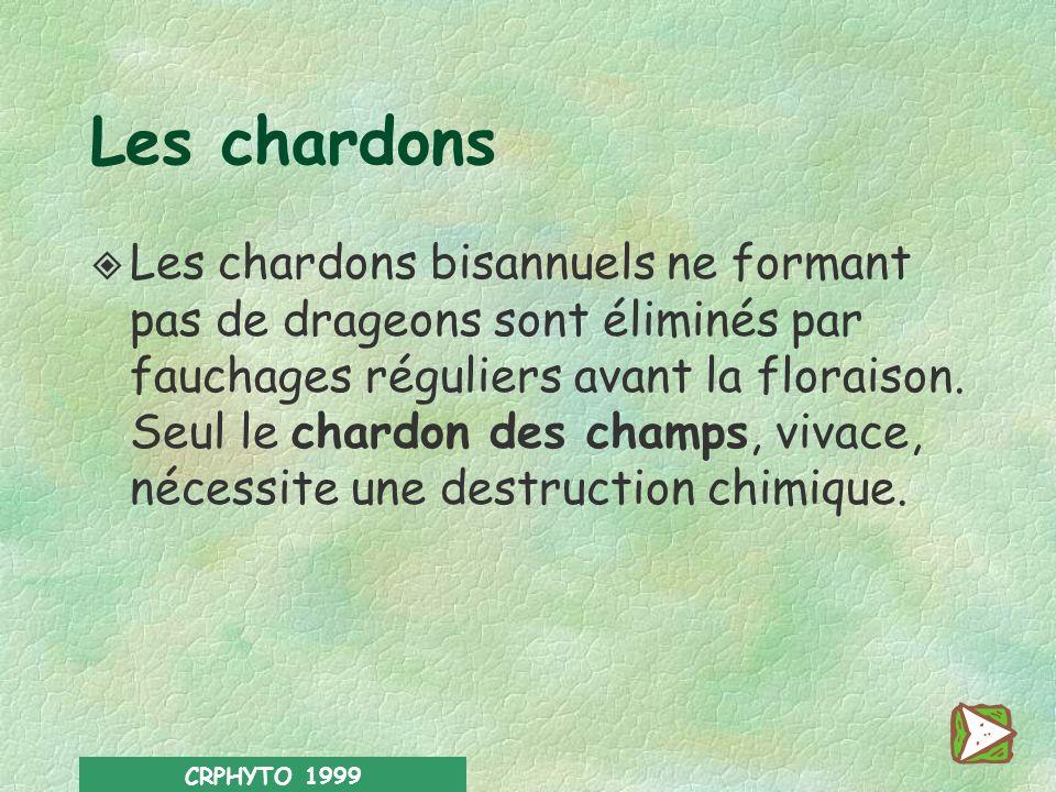 CRPHYTO 1999 Contre les chardons L obligation d échardonnage concerne 5 espèces différentes : le chardon des champs (Cirsium arvense); vivace de drage