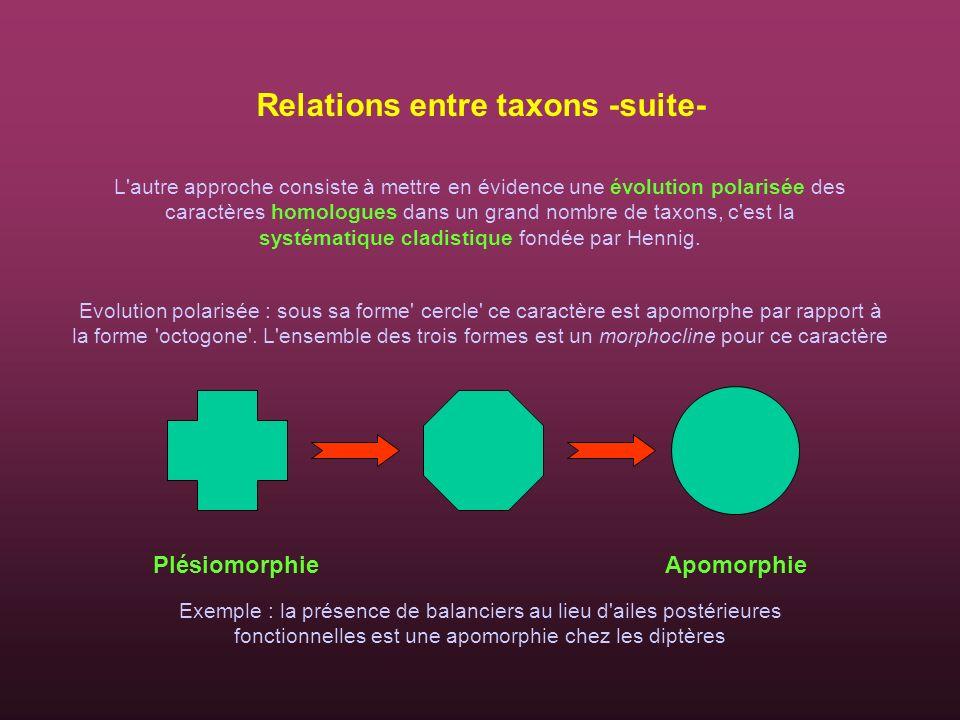 Evolution polarisée : sous sa forme' cercle' ce caractère est apomorphe par rapport à la forme 'octogone'. L'ensemble des trois formes est un morphocl