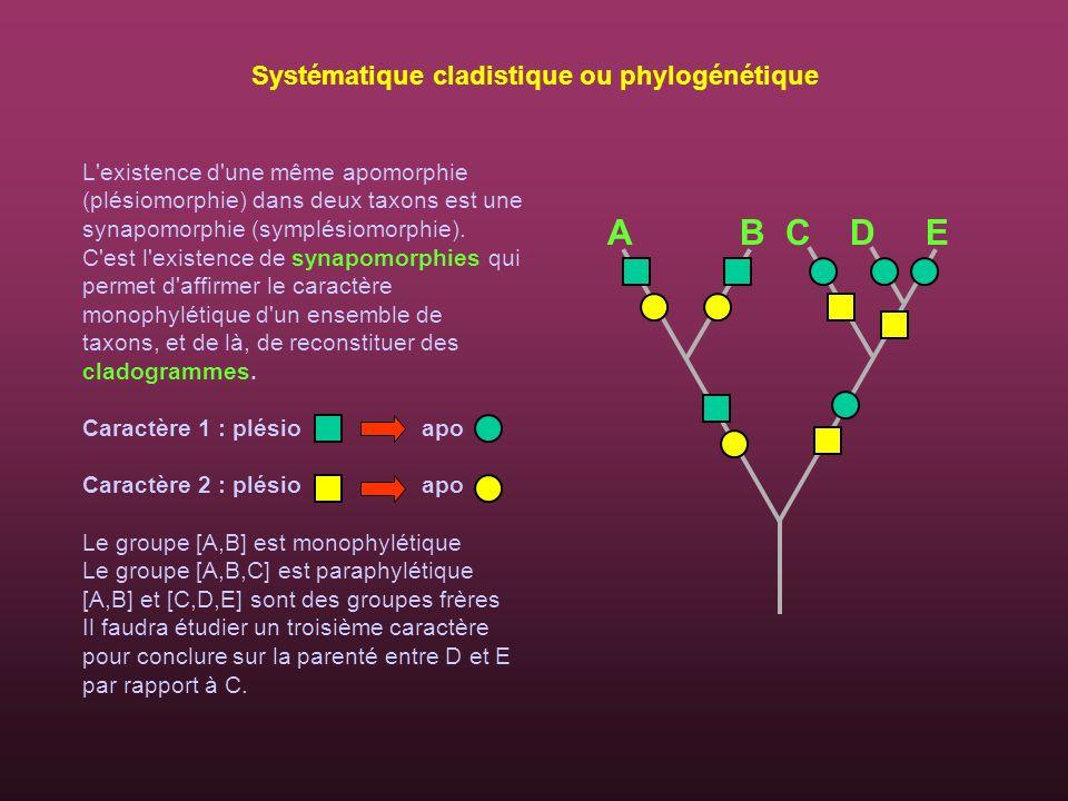 L'existence d'une même apomorphie (plésiomorphie) dans deux taxons est une synapomorphie (symplésiomorphie). C'est l'existence de synapomorphies qui p