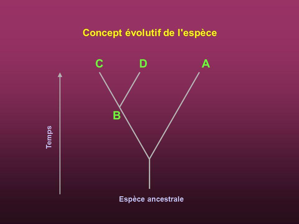 Concept évolutif de l'espèce Temps C D A B Espèce ancestrale