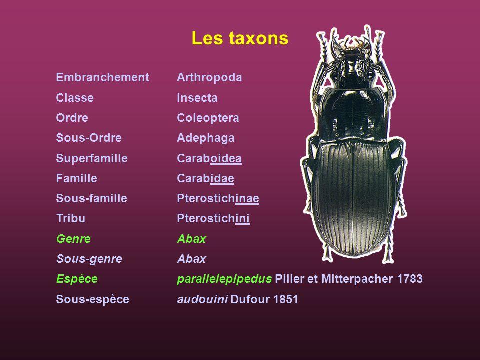 Les taxons Embranchement Classe Ordre Sous-Ordre Superfamille Famille Sous-famille Tribu Genre Sous-genre Espèce Sous-espèce Arthropoda Insecta Coleop