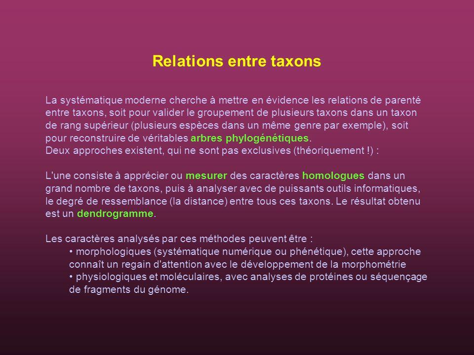 Relations entre taxons La systématique moderne cherche à mettre en évidence les relations de parenté entre taxons, soit pour valider le groupement de