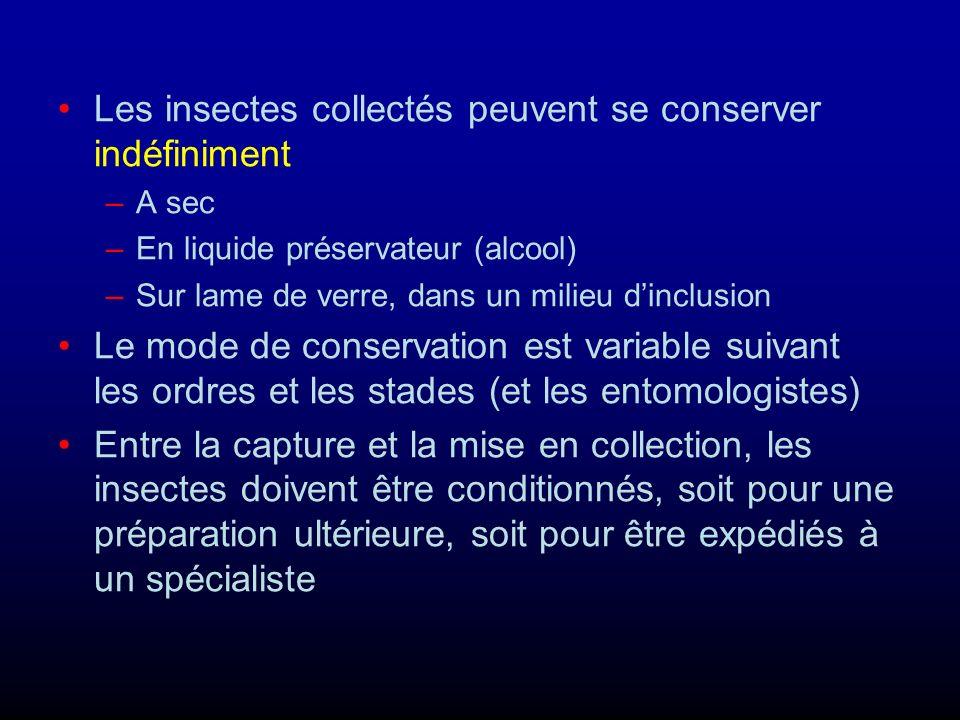 Conservation des spécimens En alcool : –La plupart des larves –Tous les adultes à téguments mous Sur lames de verre : –Certaines larves –La plupart des adultes de très petite taille (Diptères, Hyménoptères...