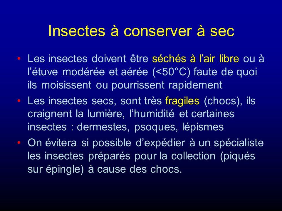 Insectes à conserver à sec Les insectes doivent être séchés à lair libre ou à létuve modérée et aérée (<50°C) faute de quoi ils moisissent ou pourriss