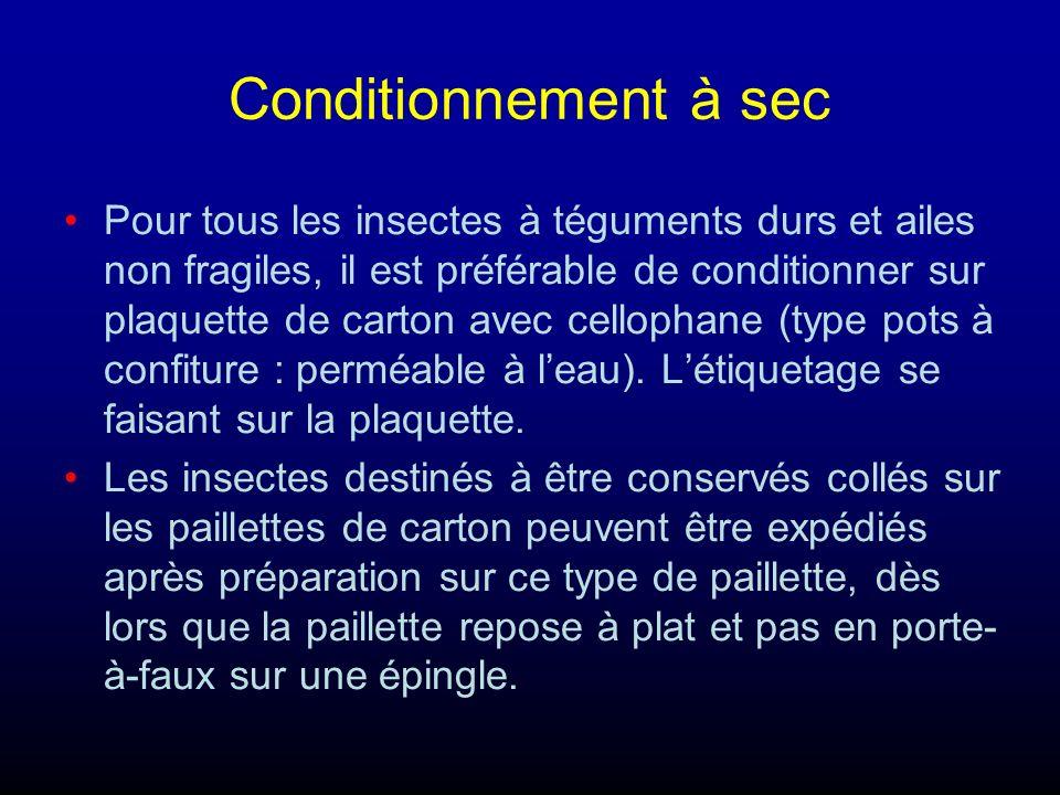 Conditionnement à sec Pour tous les insectes à téguments durs et ailes non fragiles, il est préférable de conditionner sur plaquette de carton avec cellophane (type pots à confiture : perméable à leau).
