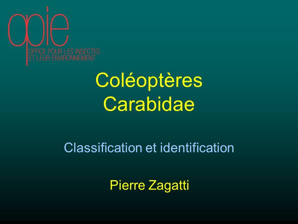 Coléoptères Carabidae Classification et identification Pierre Zagatti