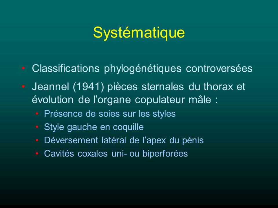 Systématique Classifications phylogénétiques controversées Jeannel (1941) pièces sternales du thorax et évolution de lorgane copulateur mâle : Présenc