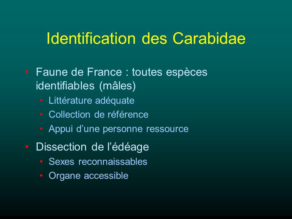 Identification des Carabidae Faune de France : toutes espèces identifiables (mâles) Littérature adéquate Collection de référence Appui dune personne r