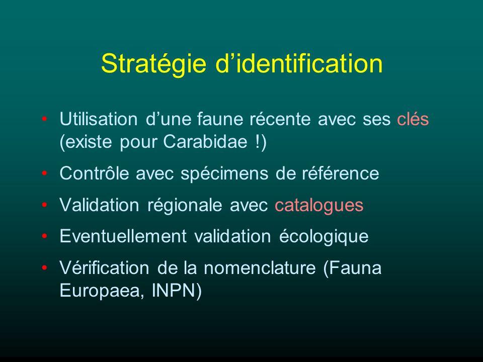 Stratégie didentification Utilisation dune faune récente avec ses clés (existe pour Carabidae !) Contrôle avec spécimens de référence Validation régio