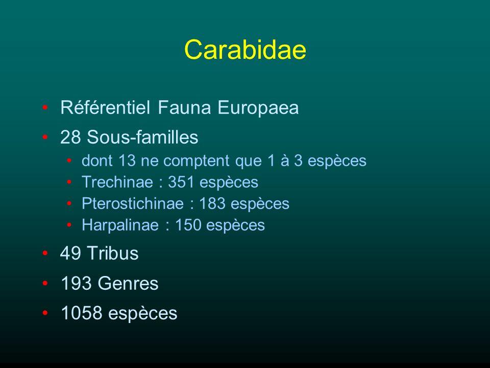 Carabidae Référentiel Fauna Europaea 28 Sous-familles dont 13 ne comptent que 1 à 3 espèces Trechinae : 351 espèces Pterostichinae : 183 espèces Harpa