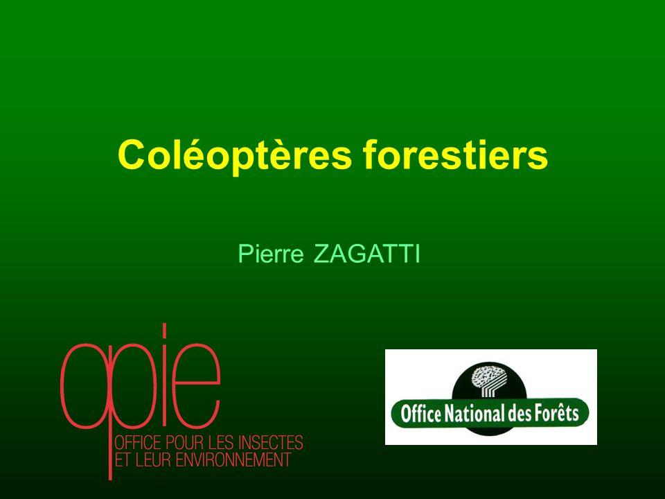 Pierre ZAGATTI Coléoptères forestiers