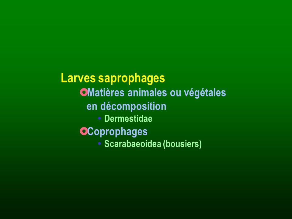 Larves saprophages Matières animales ou végétales en décomposition Dermestidae Coprophages Scarabaeoidea (bousiers)