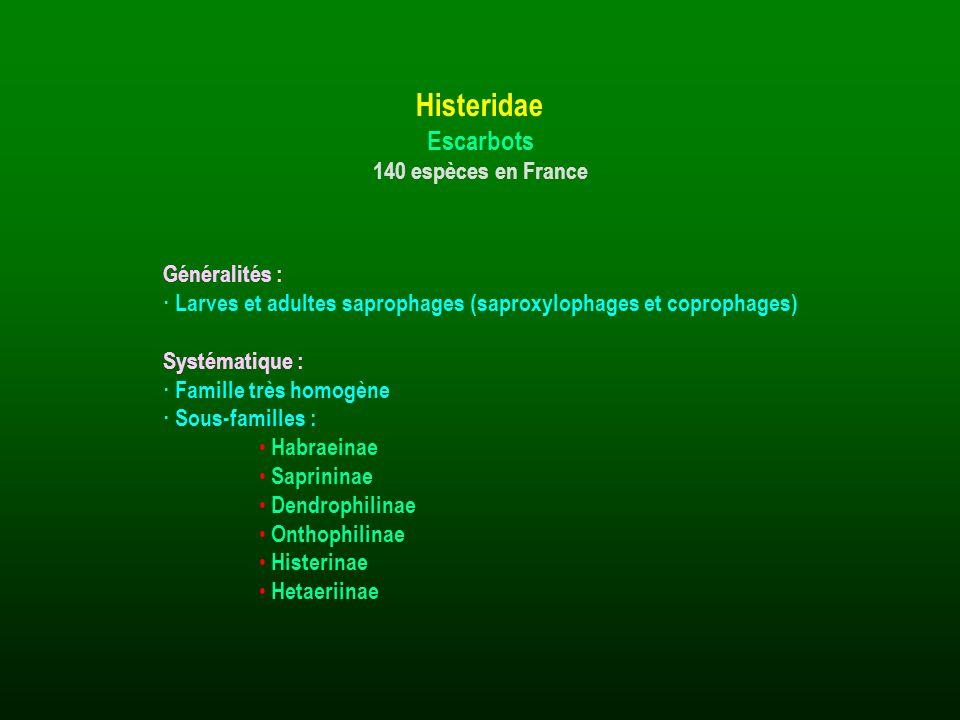 Généralités : · Larves et adultes saprophages (saproxylophages et coprophages) Systématique : · Famille très homogène · Sous-familles : Habraeinae Sap
