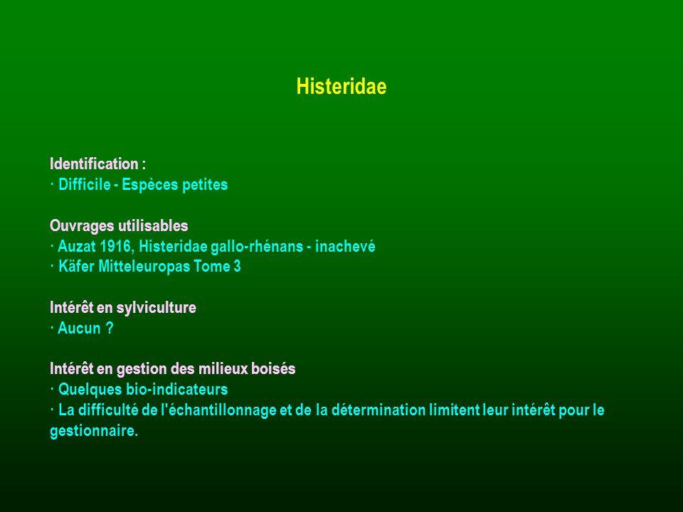 Identification : · Difficile - Espèces petites Ouvrages utilisables · Auzat 1916, Histeridae gallo-rhénans - inachevé · Käfer Mitteleuropas Tome 3 Int