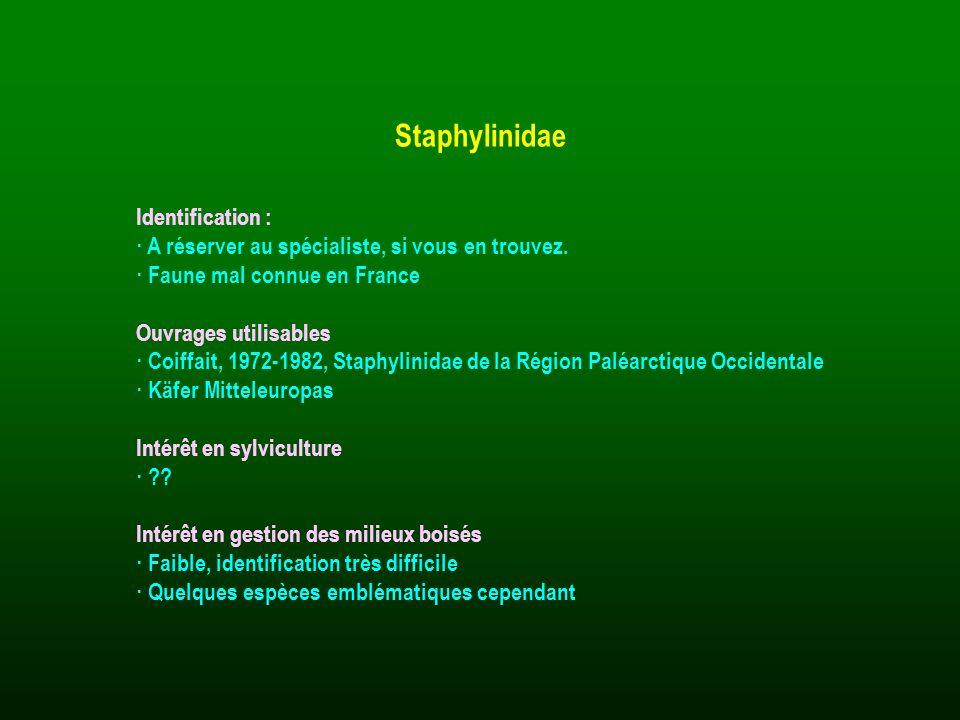 Identification : · A réserver au spécialiste, si vous en trouvez. · Faune mal connue en France Ouvrages utilisables · Coiffait, 1972-1982, Staphylinid