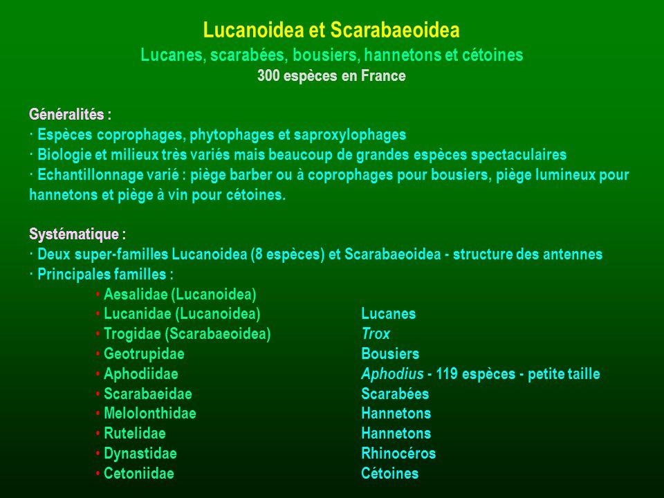 Généralités : · Espèces coprophages, phytophages et saproxylophages · Biologie et milieux très variés mais beaucoup de grandes espèces spectaculaires