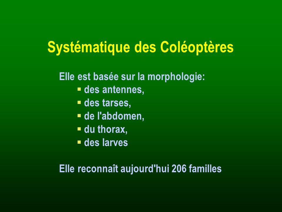 Systématique des Coléoptères Elle est basée sur la morphologie: des antennes, des tarses, de l'abdomen, du thorax, des larves Elle reconnaît aujourd'h