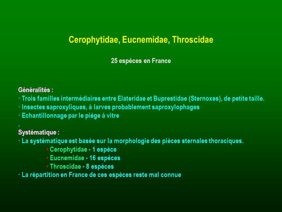 Généralités : · Trois familles intermédiaires entre Elateridae et Buprestidae (Sternoxes), de petite taille. · Insectes saproxyliques, à larves probab