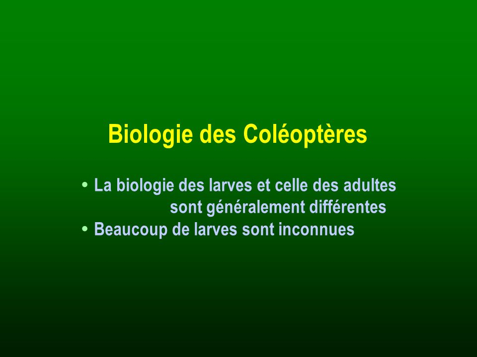 Généralités : · Larves et adultes saprophages (saproxylophages et coprophages) Systématique : · Famille très homogène · Sous-familles : Habraeinae Saprininae Dendrophilinae Onthophilinae Histerinae Hetaeriinae Histeridae Escarbots 140 espèces en France