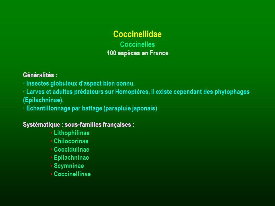 Généralités : · Insectes globuleux d'aspect bien connu. · Larves et adultes prédateurs sur Homoptères, il existe cependant des phytophages (Epilachnin