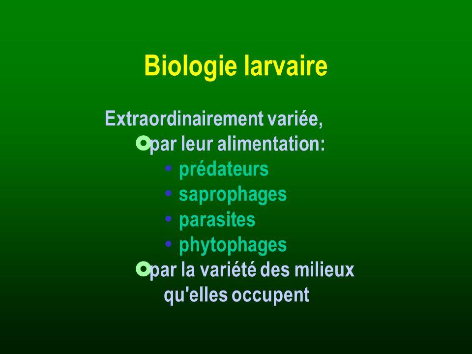 Généralités · Larves et adultes saproxyliques, une majorité d espèces xylophages.