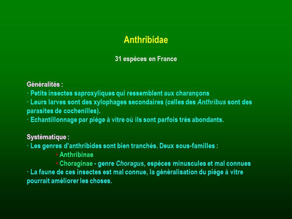 Généralités : · Petits insectes saproxyliques qui ressemblent aux charançons · Leurs larves sont des xylophages secondaires (celles des Anthribus sont