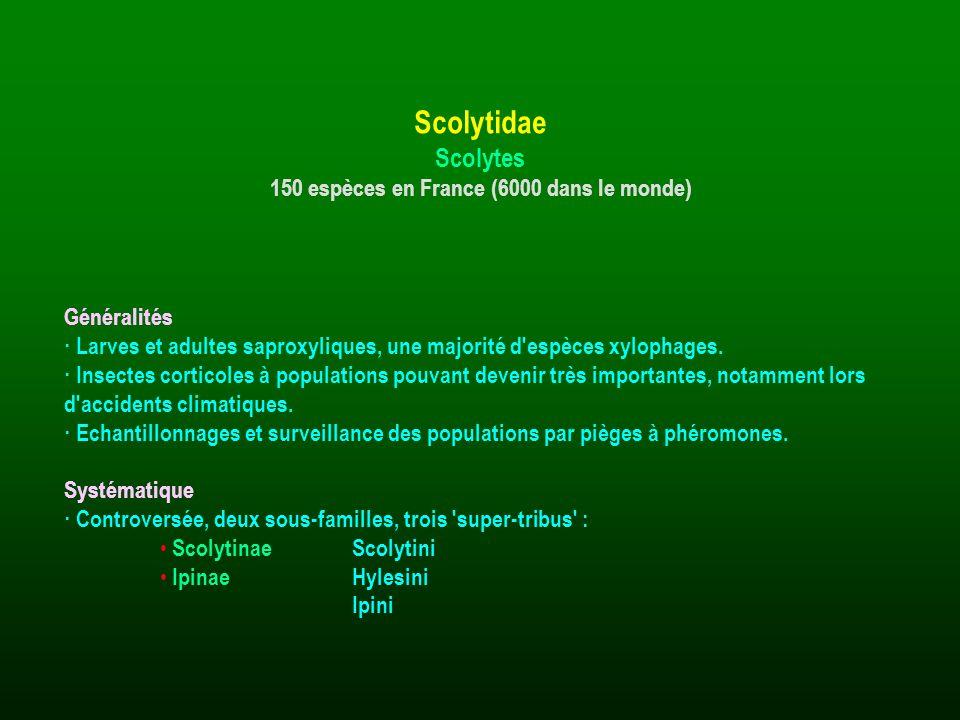 Généralités · Larves et adultes saproxyliques, une majorité d'espèces xylophages. · Insectes corticoles à populations pouvant devenir très importantes
