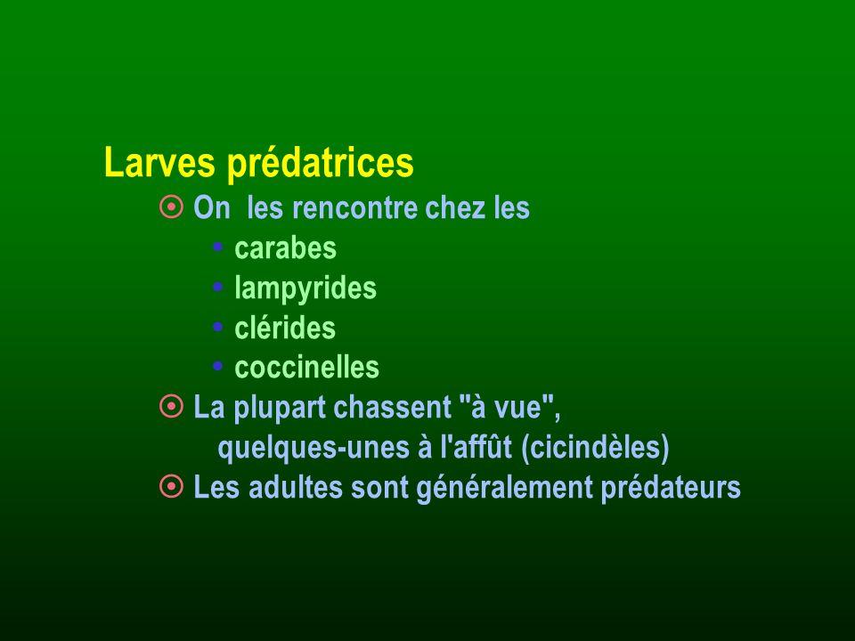 Identification : · Souvent assez facile, mais pratiquement pas de Faune de France récente.
