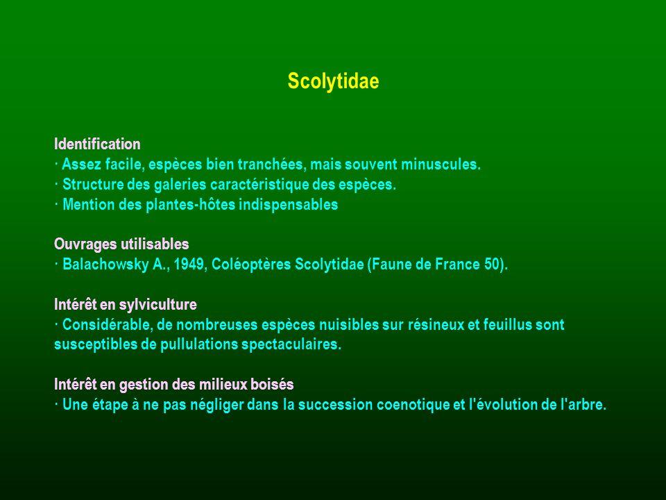 Identification · Assez facile, espèces bien tranchées, mais souvent minuscules. · Structure des galeries caractéristique des espèces. · Mention des pl